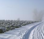 Weihnachtsbaumkultur und Feldweg im Schnee