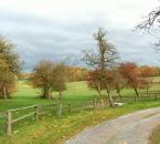 Weide am Hof im Herbst