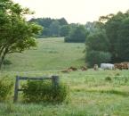 Weide am Sommermorgen