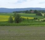 Rapsfeld südlich vom Hof