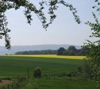 Lerchenfenster-Felder Ende Mai