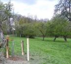Neu gepflanzter Apfelbaum