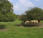 Rinder am Hof