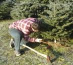 Baumschlagen in der Schonung