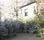 Weihnachtsbaumverkauf auf dem Hof
