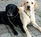 Stella und Mara