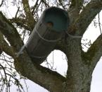 Steinkauzhöhle im Baum
