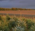 Acker südlich vom Hof im Gewitterlicht