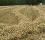 Strohschwaden bei der Getreideernte