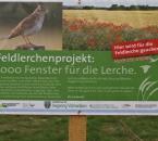 Informationsschild zum Feldlerchenprojekt